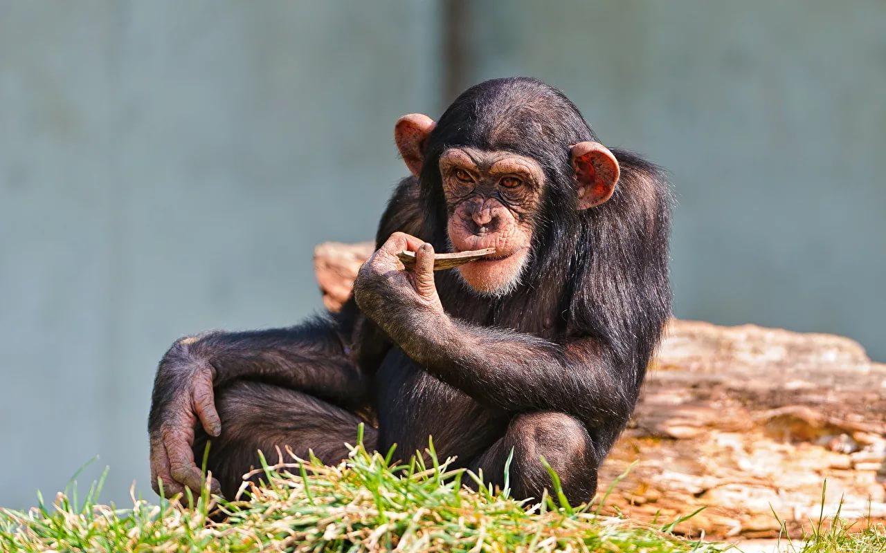 .jpg - ТОП-10 самых умных животных