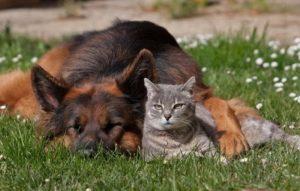 Чем опасна весна для собак и кошек