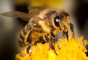 Пчёлы раскрыли учёным секреты работы человеческого мозга