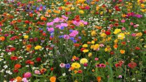 Интересные факты о цветах
