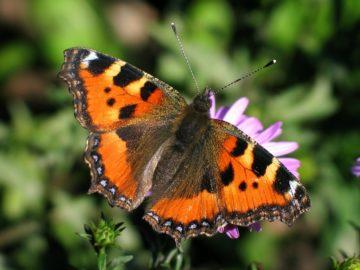 20 интересных фактов о бабочках