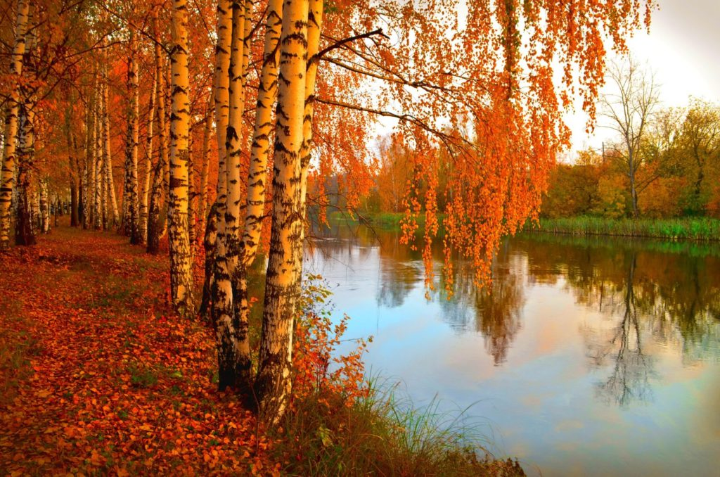 391207 svetik 1024x678 - 15 интересных фактов про осень