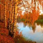 15 интересных фактов про осень