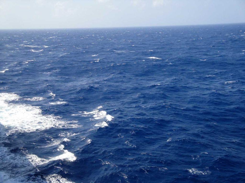 5956b1c07d812 1498853824 1024x768 - 8 интересных фактов о Саргассовом море