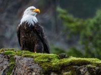 22 интересных факта об орлах