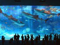 7 интересных фактов об аквариумах