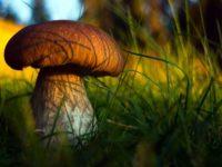 23 интересных факта о грибах