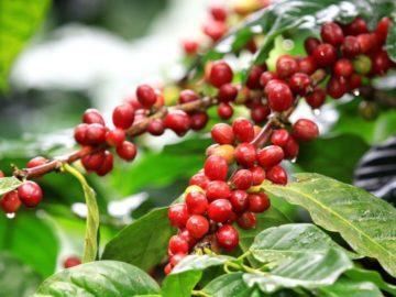 16 интересных фактов о кофе