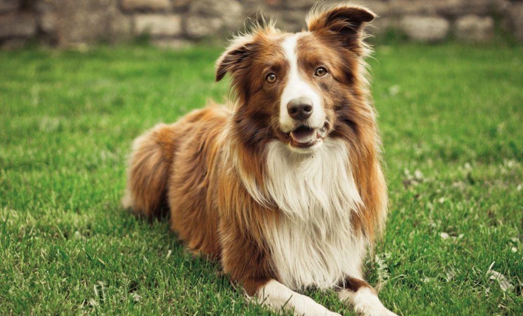 dog wallpaper 1680x1050 086 1 1024x620 - 23 интересных факта о собаках