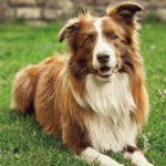 23 интересных факта о собаках
