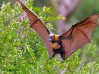 20 интересных фактов о летучих мышах