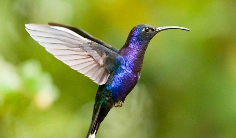 15 интересных фактов о колибри