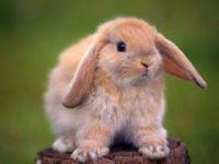 16 интересных фактов о кроликах