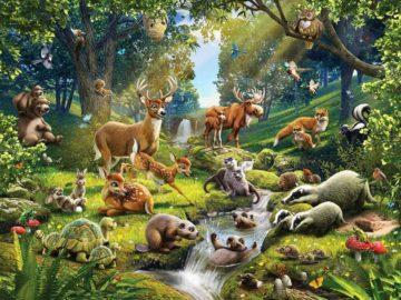 11 интересных фактов о лесных животных