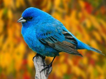 26 интересных фактов о птицах