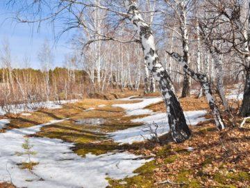 Интересные факты о весне