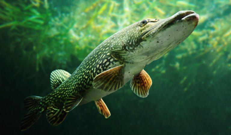 29 интересных фактов о рыбах
