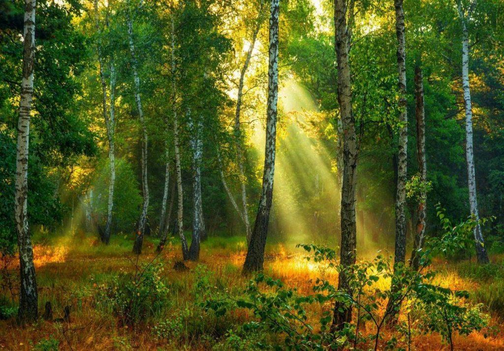 s1200 3 1024x714 - 27 интересных фактов о лесах и деревьях