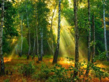 27 интересных фактов о лесах и деревьях