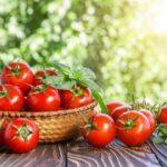 15 интересных фактов о помидорах