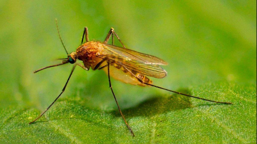 skolko zhivut komary 02 1 1024x575 - 28 интересных фактов о комарах