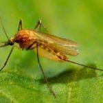 28 интересных фактов о комарах