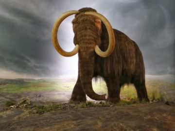 30 интересных фактов о мамонтах