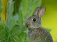 15 интересных фактов про зайцев