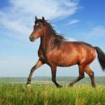 11 интересных фактов о лошадях