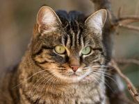 25 интересных фактов о кошках
