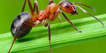 25 интересных фактов о муравьях