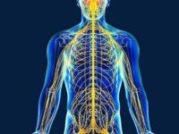 17 интересных фактов о нервной системе человека