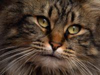 19 интересных фактов о домашних кошках