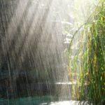17 интересных фактов о дожде